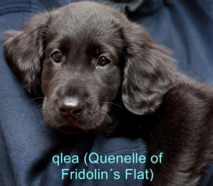 Qlea (Quenelle of Fridolins Flat)